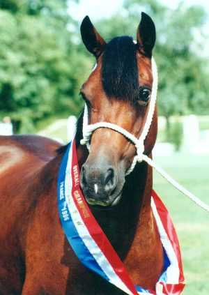 Supreme Champion LLANARTH MERERID
